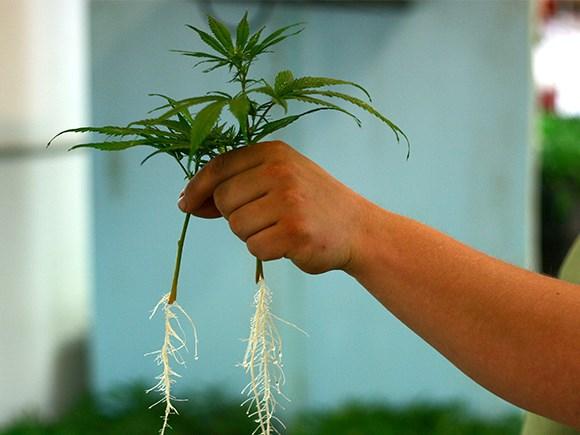 Clone & Seedling Propagation