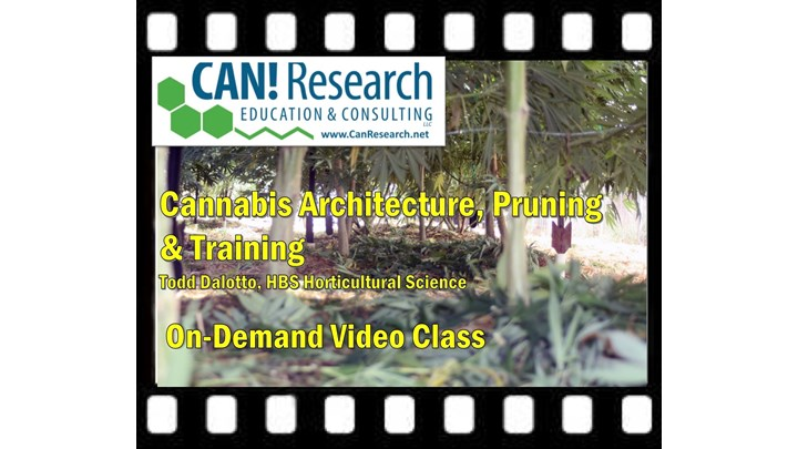 Cannabis Architecture, Pruning & Training Class and Course Review