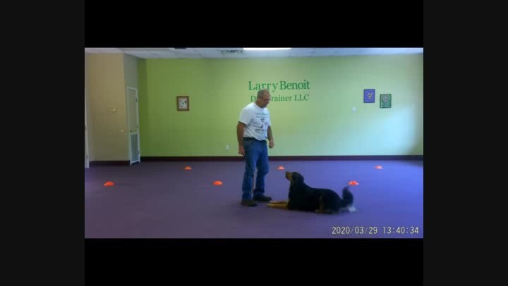 Basic Dog Obedience Wk. 5