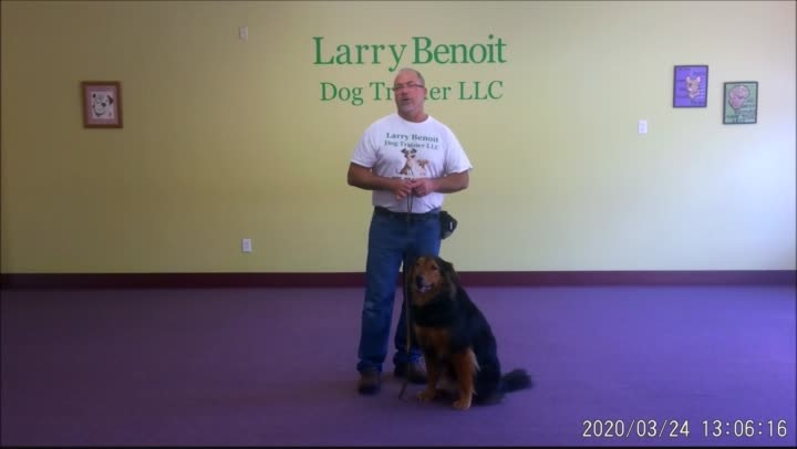 Basic Dog Obedience Wk. 2