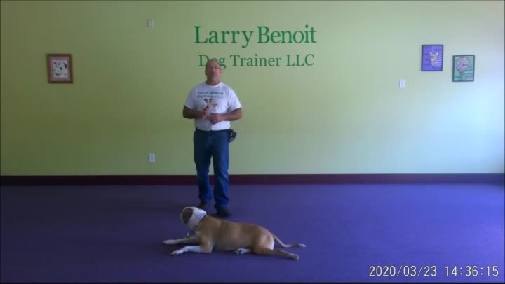 Basic Dog Obedience Wk. 1