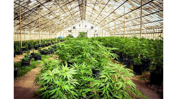 Real Estate in The Cannabis Industry