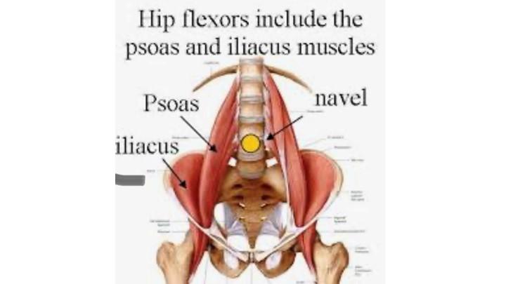 Hip Flexors- Iliopsoas