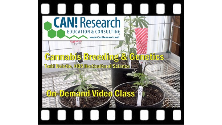 Cannabis Breeding and Genetics class