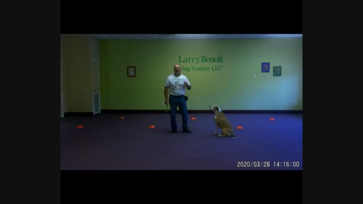 Basic Dog Obedience Wk. 4